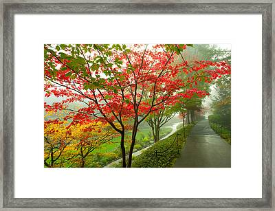 Trees Along A Garden Path, Victoria Framed Print by Panoramic Images