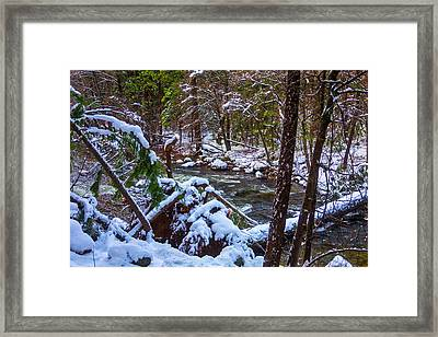 Trees Along The Merced River Framed Print by Garry Gay