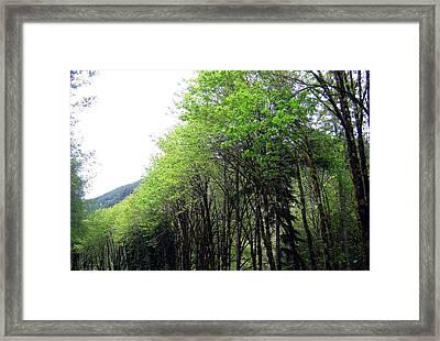 Trees Along The Umpqua River 1 Framed Print by Will Borden
