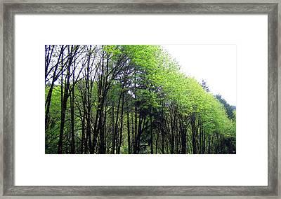 Trees Along The Umpqua River 2 Framed Print by Will Borden