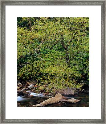 Trees Along West Prong Of Little Pigeon Framed Print by Panoramic Images