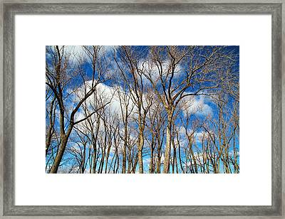Framed Print featuring the photograph Trees And Clouds by Valentino Visentini