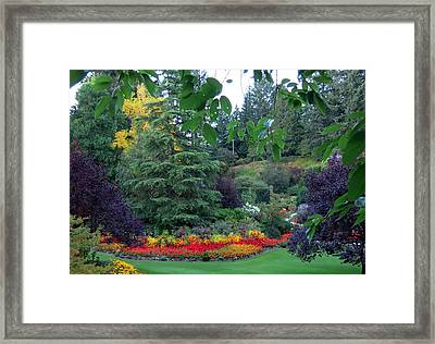 Trees And Flowers Framed Print