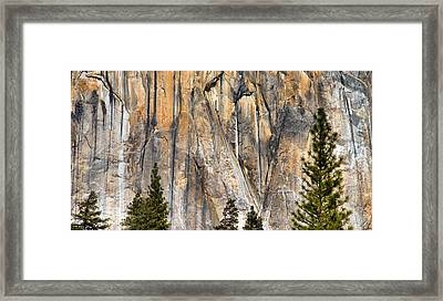 Trees And Granite Framed Print