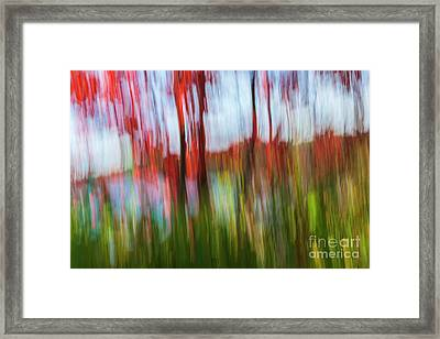 Trees And Lake Framed Print by Elena Elisseeva
