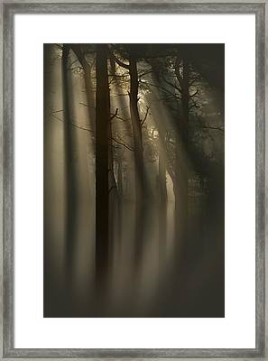 Trees And Light Framed Print