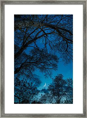 Trees And Moon Framed Print