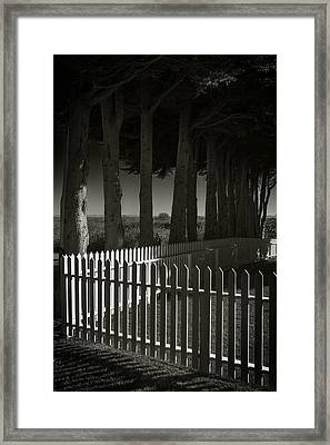 Trees And Pickets Framed Print