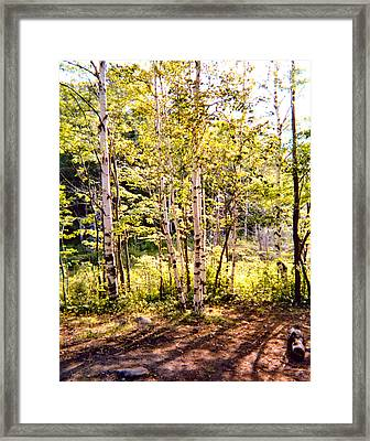 Trees And Shadows Framed Print by Eliot LeBow