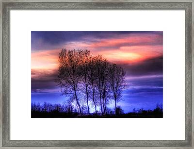 Trees And Twilight Framed Print
