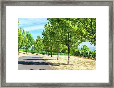 Trees And Vineyards Framed Print by Jess Kraft