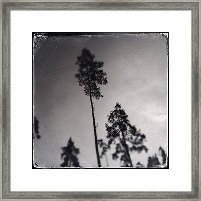 Trees Black And White Wetplate Framed Print