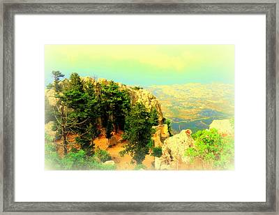 Growing Trees In The Mountains  Framed Print