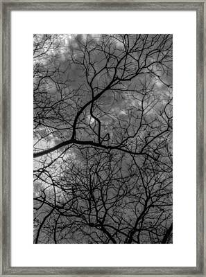 Trees Clouds And Sun Framed Print