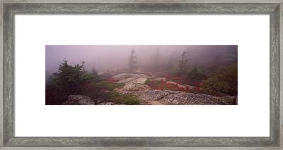 Trees Covered With Fog, Cadillac Framed Print