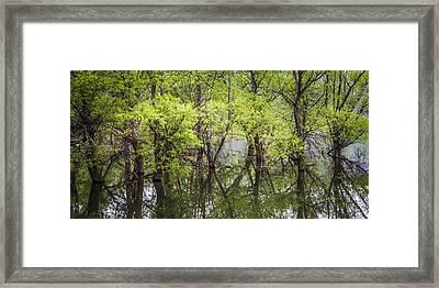 Trees Framed Print by Debra and Dave Vanderlaan
