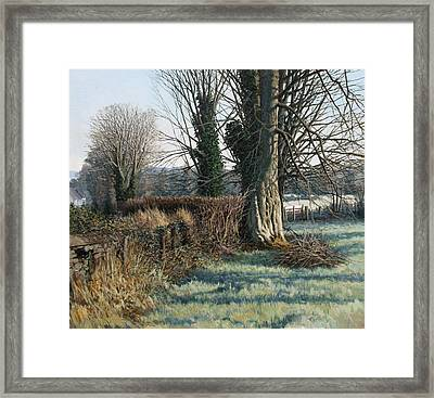 Trees Early Morning In Winter Framed Print by Eugene Conway