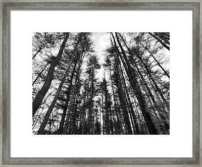 Trees Framed Print by Eric Radclyffe