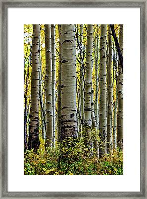 Trees For The Forest Framed Print by Jennifer Grover