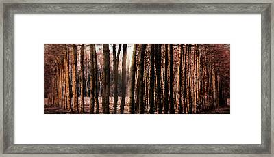 Trees Gathering Framed Print by Wim Lanclus