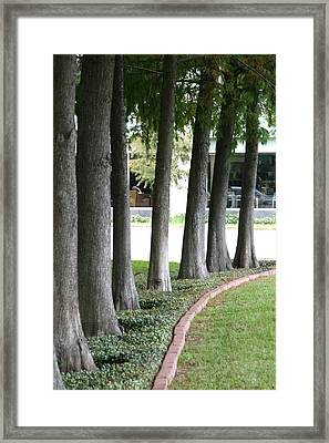 Trees Framed Print by Gracey Tran
