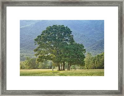 Trees - Great Smoky Mountains - Meadow Framed Print by Nikolyn McDonald