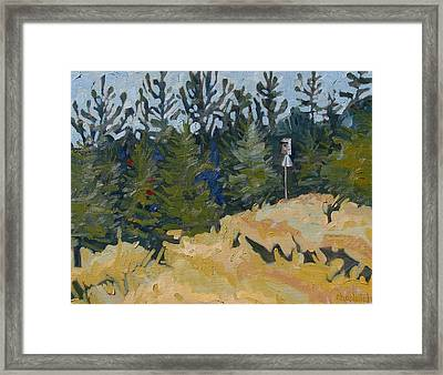 Trees Grow Framed Print