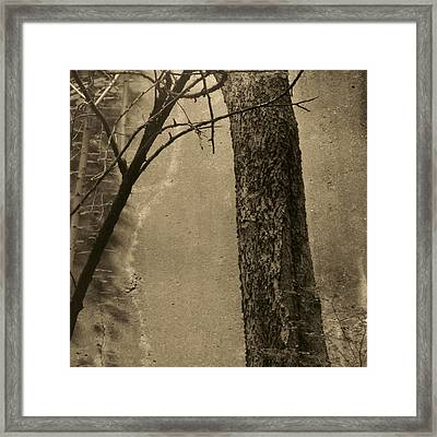 Trees Growing In Silo - Square 2015 Edition - Brown Framed Print by Tony Grider