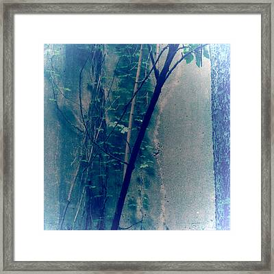 Trees Growing In Silo Abstract- Square 2015 Edition Framed Print by Tony Grider