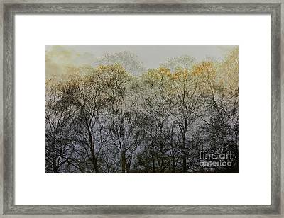 Trees Illuminated By Faint Sunshine, Double Exposed Image Framed Print by Nick Biemans