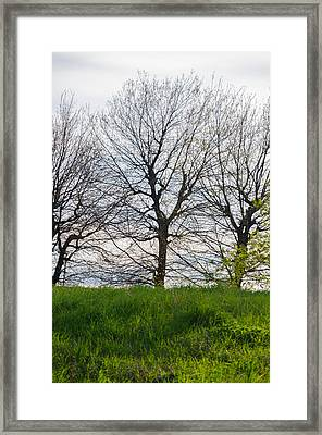Trees In April - 2  Framed Print by Andrea Mazzocchetti