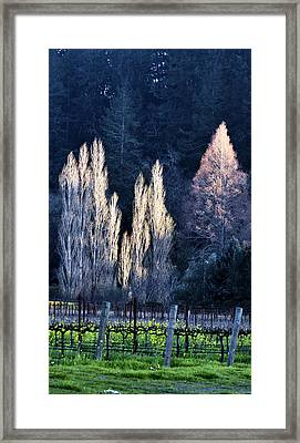 Trees In Fall Napa Valley Framed Print