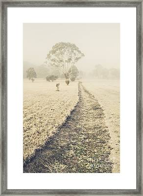 Trees In Fog And Mist Framed Print by Jorgo Photography - Wall Art Gallery