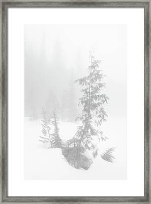 Trees In Fog Monochrome Framed Print