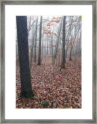 Trees In Foggy Fall Woods Framed Print by Richard Singleton