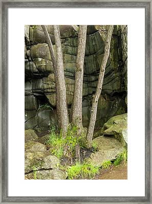 Trees In Glacial Rock 1 Framed Print