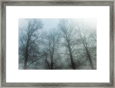 Trees In Mist Framed Print
