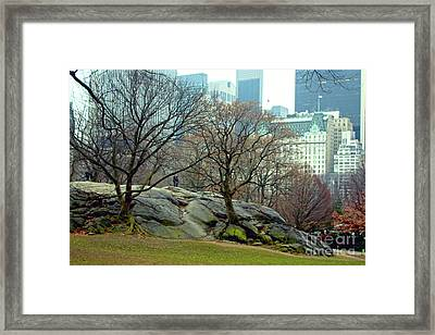 Trees In Rock Framed Print