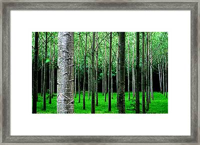 Framed Print featuring the digital art Trees In Rows by Julian Perry