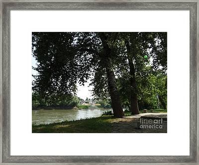 Trees In Shadows Framed Print by Rudolf Takacs