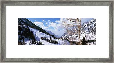 Trees In Snow, Snowbird Ski Resort Framed Print by Panoramic Images