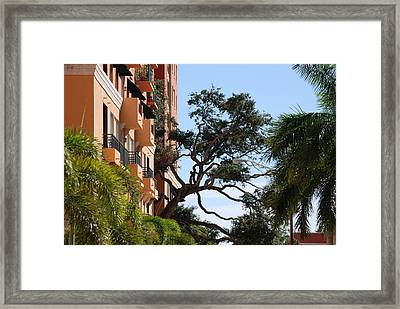 Trees In Space Framed Print by Rob Hans