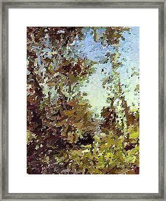 Trees In The Back Yard Framed Print by Don Phillips