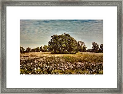 Trees In The Cotton Field Framed Print by Jai Johnson