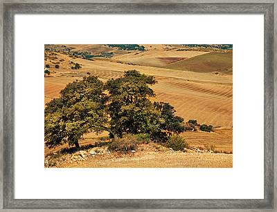 Trees In The Fields. Andalusia Framed Print