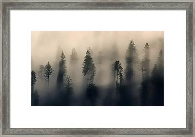 Trees In The Fog Framed Print by Jerry Sodorff