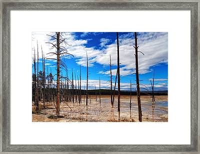Framed Print featuring the photograph Trees In The Midway Geyser Basin by Lars Lentz