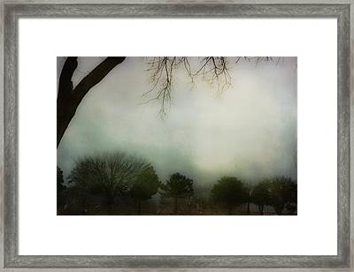 Trees In The Mist Framed Print by Jill Smith