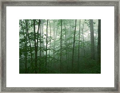 Framed Print featuring the photograph Trees In The Mist by Joye Ardyn Durham