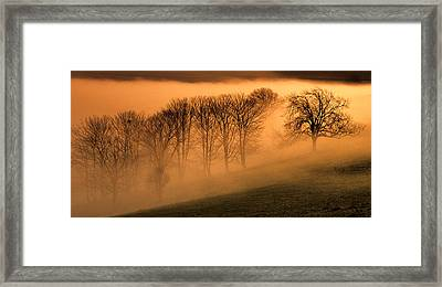 Trees In The Mist Framed Print by Hazy Apple